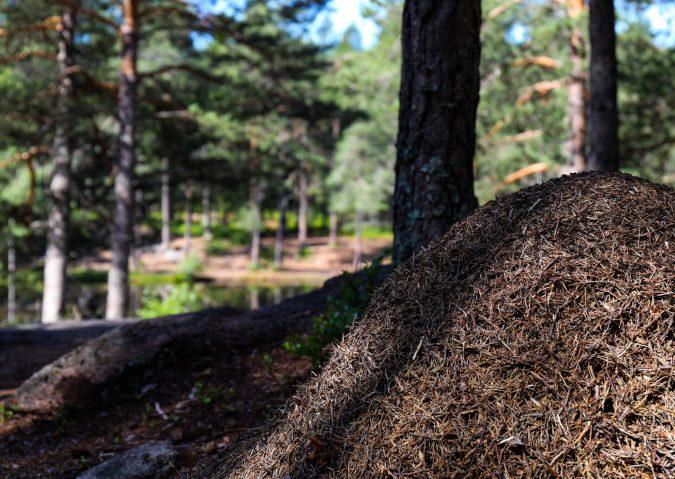 Nedre Blanksjø9